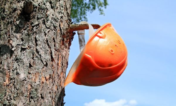 Tree Service Jobs in Indianapolis 317-783-2518