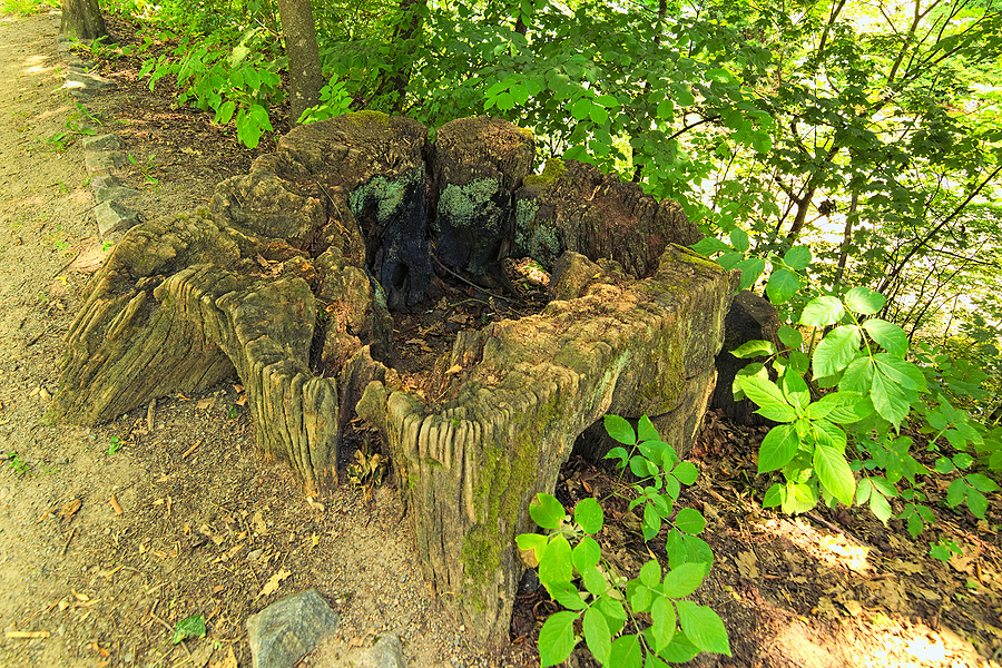 Indianapolis Stump Removal Service