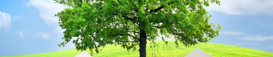Indianapolis Tree Care