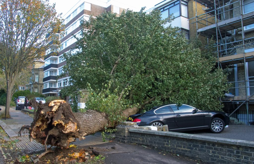 Dangerous Tree Removal 317-783-2518