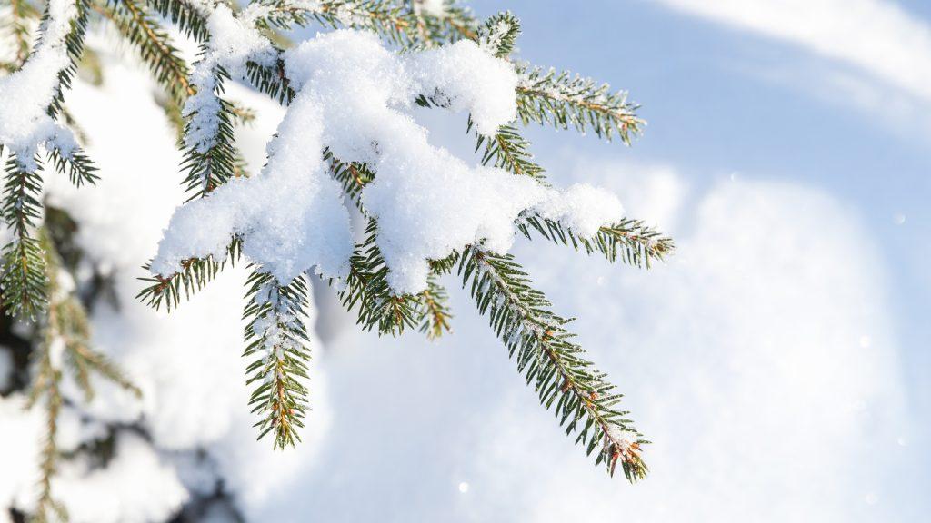Indianapolis Tree Care 317-783-2518