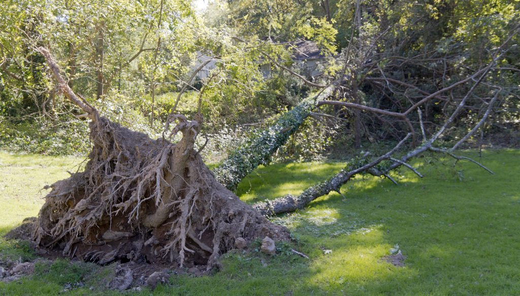 Indianapolis Tree Removal 317-783-2518