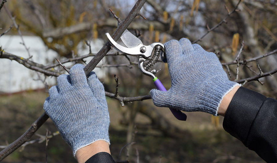Indianapolis Tree Pruning