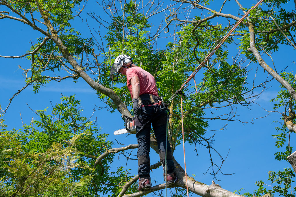 Indianapolis Tree Service 317-783-2518