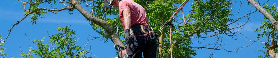 Indianapolis Tree Service 317-783-2518