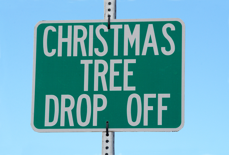 Indianapolis Indiana Tree Service