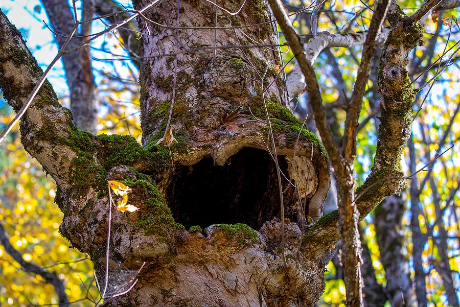 Indianapolis Tree Pruning 317-783-2518