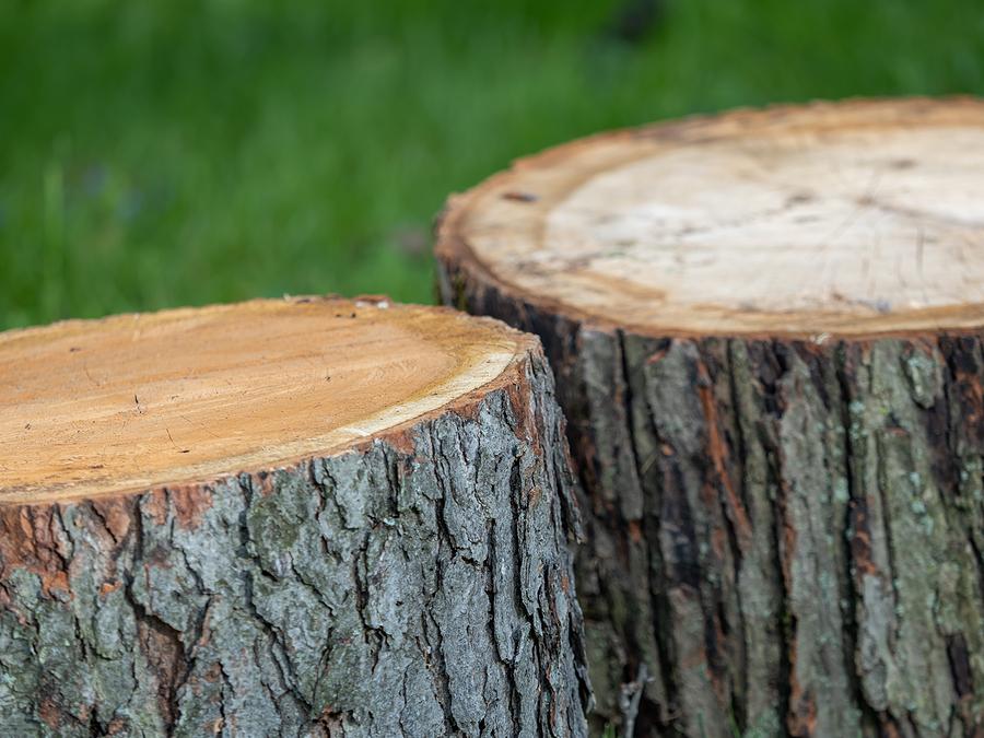 Indianapolis Tree Stump Removal