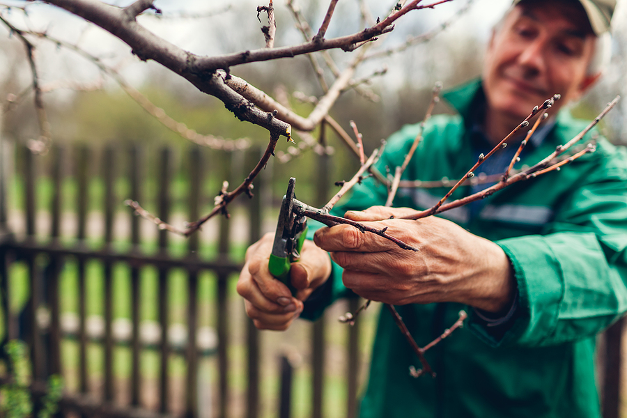 Indianapolis Tree Pruning Service