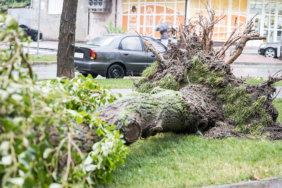 Indianapolis Tree Removal Services 317-783-2518