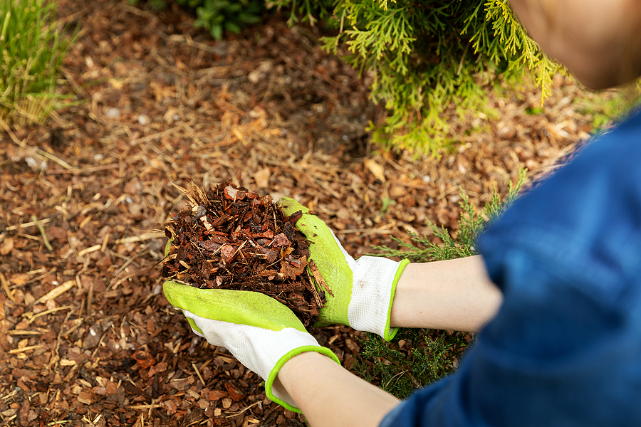 Tree Care Services Indianapolis Indiana