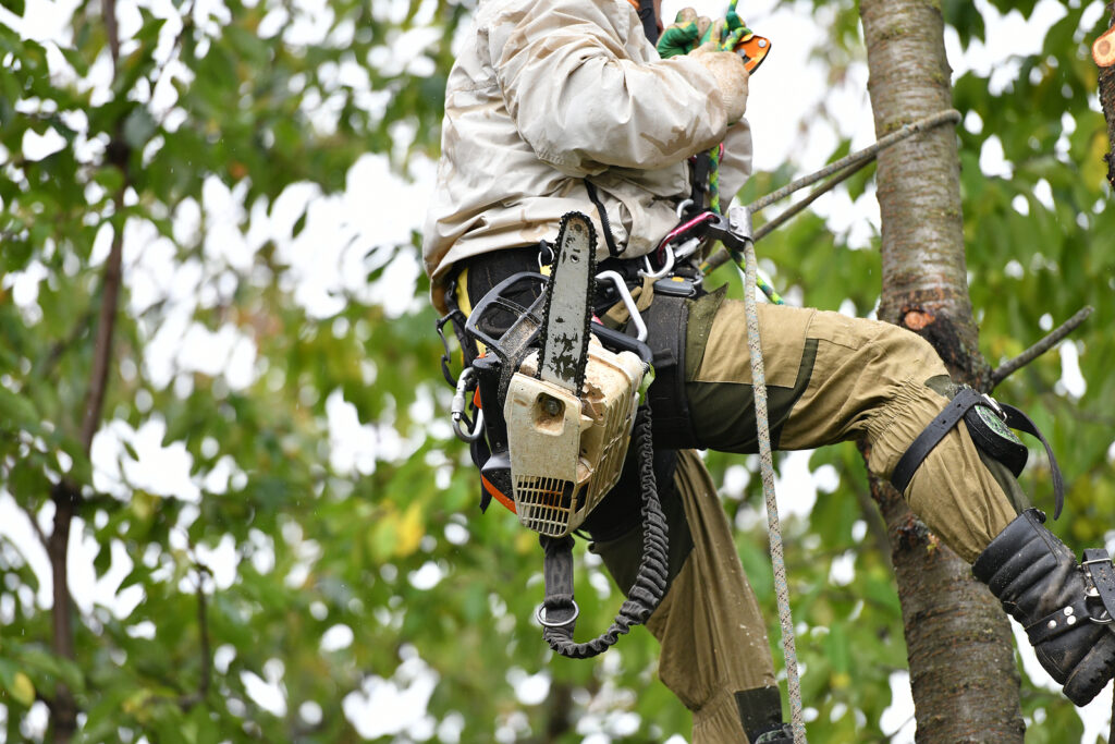 Indianapolis Tree Removal and Tree Care 317-783-2518