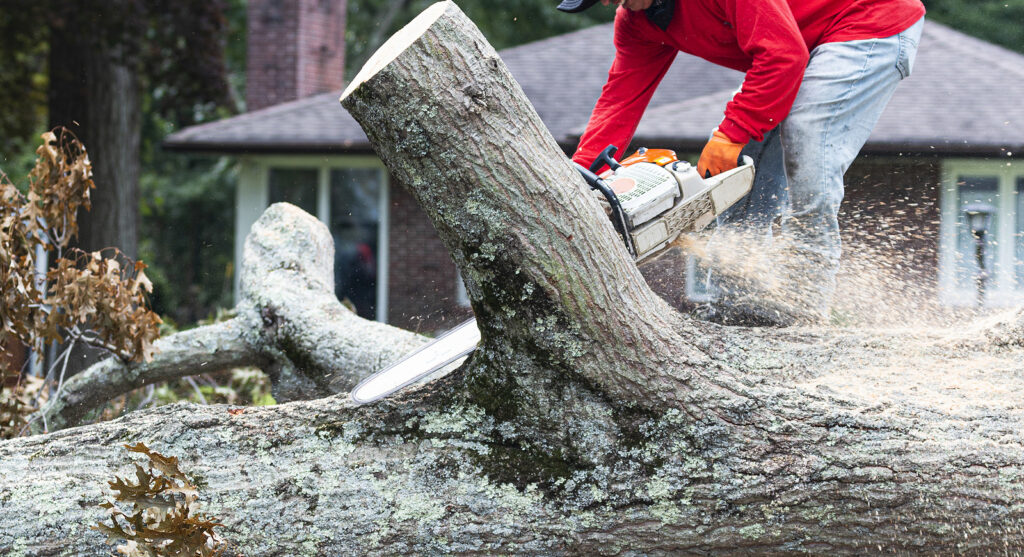 Indianapolis IN Tree Removal 317-783-2518