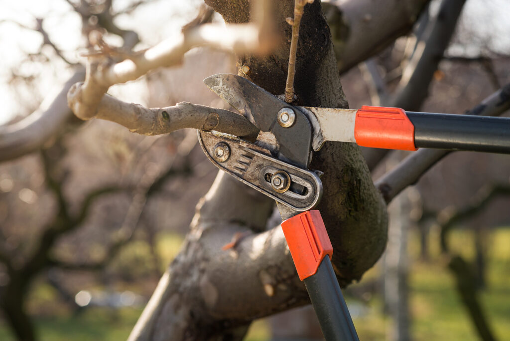 Indianapolis Tree Pruning Service 317-783-2518