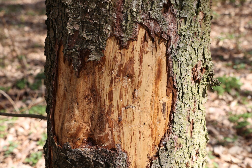 Local Tree Care Services 317-783-2518