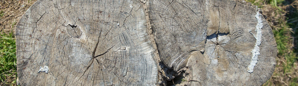 Tree Stump Removal Indianapolis IN