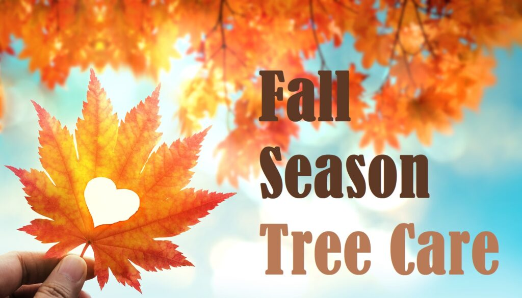 Fall Tree Care Indianapolis IN 317-783-2518