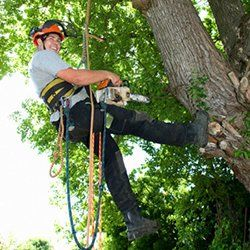 Complete Tree Care 317-783-2518